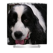 #940 D1049 Farmer Browns Springer Spaniel Shower Curtain