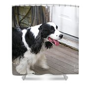 #940 D1065 Farmer Browns Springer Spaniel Time For A Visit Shower Curtain