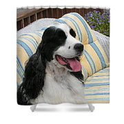 #940 D1066 Farmer Browns Springer Spaniel Happy Shower Curtain