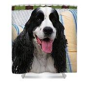 #940 D1090 Farmer Browns Springer Spaniel Shower Curtain