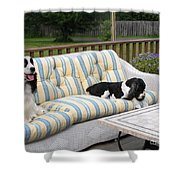 #940 D1094 Farmer Browns Springer Spaniel Together Shower Curtain