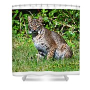 9701 Shower Curtain