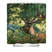Majestic Powerful Red Deer Stag Cervus Elaphus In Forest Landsca Shower Curtain