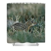 A 13-lined Ground Squirrel At The Henry Shower Curtain