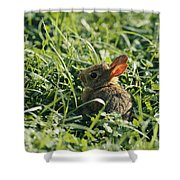 A Baby Cottontail Rabbit Sits Among Shower Curtain