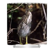 A Baby Green Heron Stretched Out Peering Into The Camera Shower Curtain