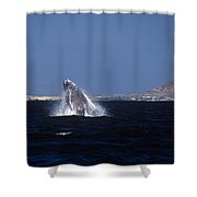 A Baby Humped Backed Whale Breeching In Banderous Bay Mexico Shower Curtain