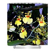 A Ballet Of Tiny Orchids Shower Curtain