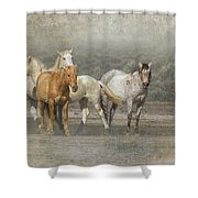A Band Of Horses Shower Curtain