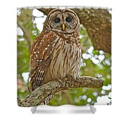 A Barred Owl Shower Curtain