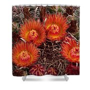 A Barrel Cactus Is Blooming Shower Curtain