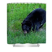 A Bear Over There Shower Curtain