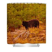 A Bear Staring At Something Shower Curtain