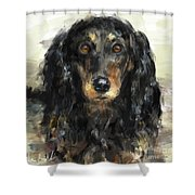 A Beautiful Artistic Painting Of A Dachshund  Shower Curtain