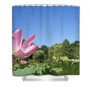 A Beautiful Emperor Lotus Blooms Shower Curtain