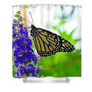 A Beautiful Monarch Shower Curtain