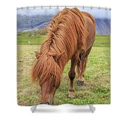 A Beautiful Red Mane On An Icelandic Horse Shower Curtain