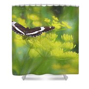 A Beautiful Swallowtail Butterfly On A Yellow Wild Flower Shower Curtain