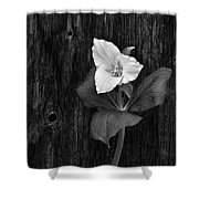 a beautiful Trillium  Shower Curtain