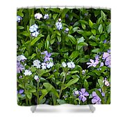 A Bed Of Blooms Shower Curtain