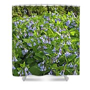 A Bed Of Bluebells Shower Curtain