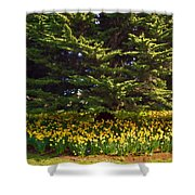 A Bed Of Narcissus Shower Curtain