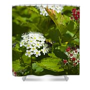 A Bee And A Fly Meet On A Flower Shower Curtain