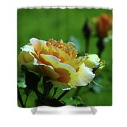 A Benton City Rose  Shower Curtain