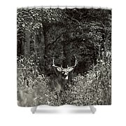 A Big Buck In Rut Shower Curtain
