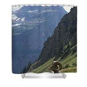 A Bighorn Sheep Ram, Ovis Canadensis Shower Curtain