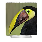 A Bird For His Bill.. Shower Curtain