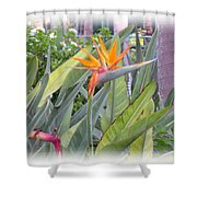 A Bird In Paradise Shower Curtain