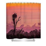 A Birdie Morning Shower Curtain