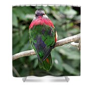 A Bird's Perspective Shower Curtain