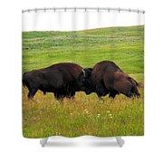 A Bison Brawl Shower Curtain