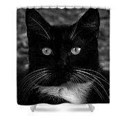 A Black Cat's Life -florida Shower Curtain