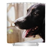 A Black Dog Shower Curtain