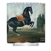 A Black Horse Performing The Courbette Shower Curtain