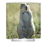 A Black-tailed Prairie Dog In Montana Shower Curtain
