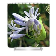A Blooming Bud Shower Curtain