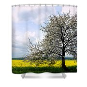 A Blooming Tree In A Rapeseed Field Shower Curtain