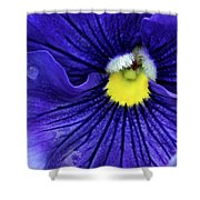 A Blue Pansy Shower Curtain