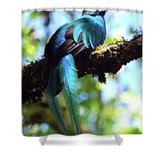 A Blue Stand Out Shower Curtain