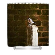 A Bluebird At The Governor's Palace Gardens Shower Curtain