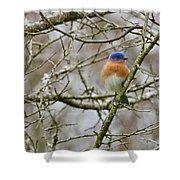A Bluebird  Shower Curtain