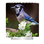A Bluejay Bouquet Shower Curtain