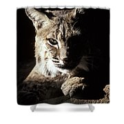 A Bobcat Sitting In A Ray Of Sun Shower Curtain