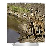 A Bouquet Of Giraffes Shower Curtain