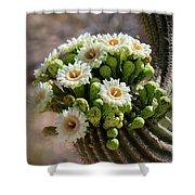 A Bouquet Of Saguaro Blossoms Shower Curtain