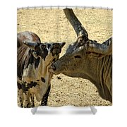 A Bovine Love Shower Curtain